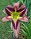 google maps icon for Ellies Daylilies